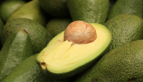 palta o avocado